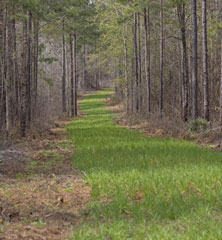 creating food plots for deer