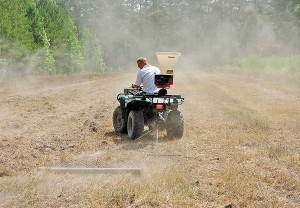 liming food plots for deer