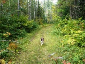 Food plots for grouse