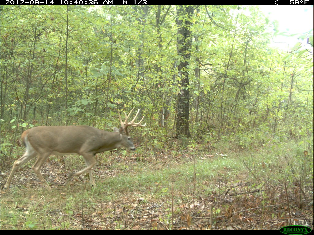food plots failed