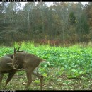 Steve Bartylla on Patterning a Deer
