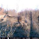 deer habitat plans