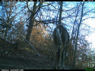 Steve bartylla deer nuts