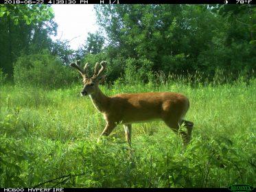 Gregorys food plots for deer