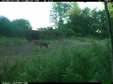 food plots for deer