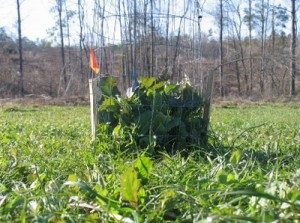size of food plots for deer
