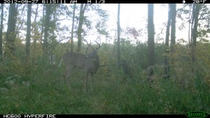 defensive food plots for deer