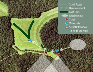food plots for deer work