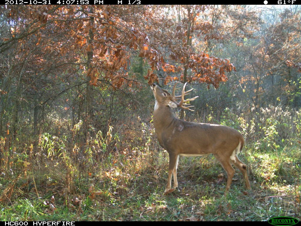 Best food plots for deer