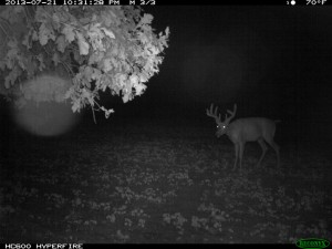 food plots for deer whitetail