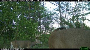 food plots deer