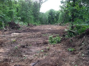 Whitetail food plot