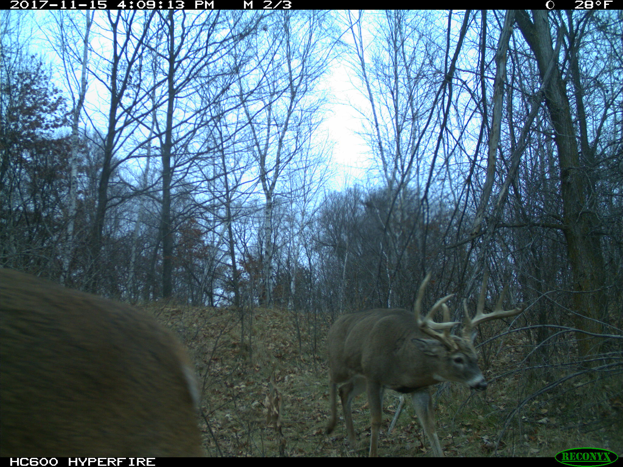 Mn High Fence Preserve For Sale Bartylla S Whitetail