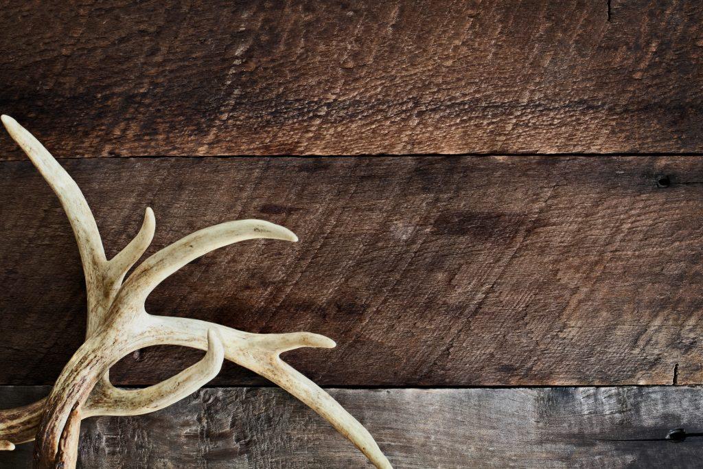 Minnesota Hunting Lease
