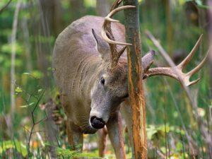 Deer habitat consultants